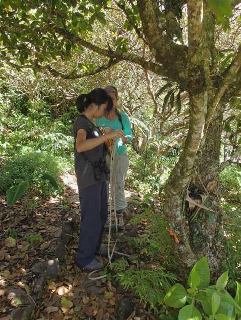 Measuring bromeliads